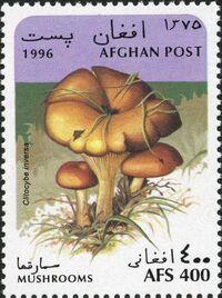 Afghanistan 1996 Mushrooms c