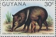 Guyana 1981 Wildlife f