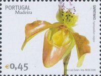 Madeira 2006 Madeira Flowers i