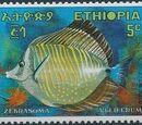 Ethiopia 1970 Tropical Fishes