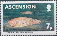 Ascension 1983 Sea Shells a