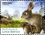 Portugal 2015 Reintroducing the Iberian Lynx into Portugal c