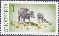 Albania 1965 Water Buffalo a