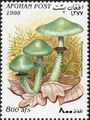 Afghanistan 1998 Mushrooms c.jpg