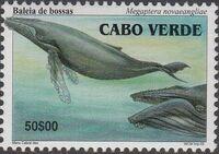 Cape Verde 2003 Whales c