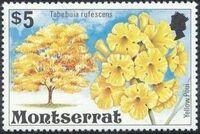 Montserrat 1976 Flowering Trees n