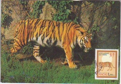 Macao 1986 Year of the Tiger m