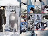 British Antarctic Territory 2006 Penguins of the Antarctic