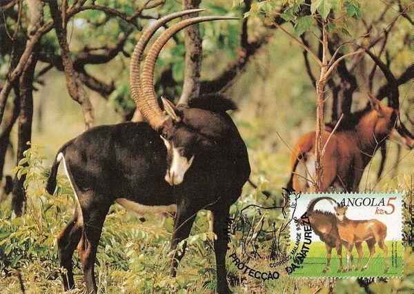 Angola 1990 WWF - Giant Sable Antelope MCb