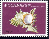 Mozambique 1980 Stamp Day - Maritime Shells of Mozambique f