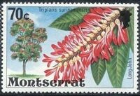 Montserrat 1976 Flowering Trees k