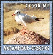 Mozambique 2002 The World of the Sea - Sea Birds 1 b