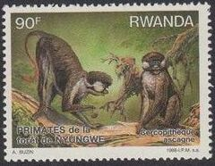 Rwanda 1988 Primates of Nyungwe Forest d