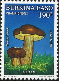 Burkina Faso 1990 Mushrooms d
