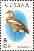 Guyana 1994 Birds of the World (PHILAKOREA '94) f