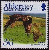 Alderney 2002 Migrating Birds Part 1 Raptors c