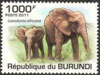 Burundi 2011 Elephants of the African Savanna i
