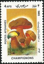 Afghanistan 1985 Mushrooms b