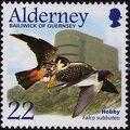 Alderney 2002 Migrating Birds Part 1 Raptors a.jpg