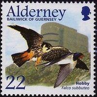 Alderney 2002 Migrating Birds Part 1 Raptors a