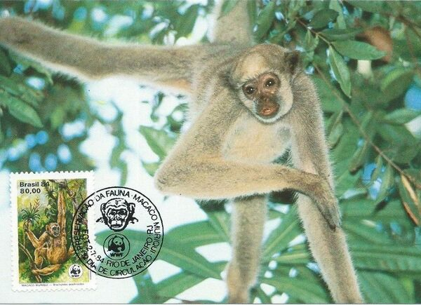 Brazil 1984 WWF - Southern Muriqui MCb