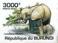 Burundi 2011 Elephants of the African Savanna h