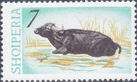 Albania 1965 Water Buffalo d