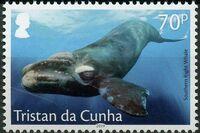 Tristan da Cunha 2019 Marine Mammals b