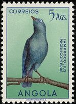 Angola 1951 Birds from Angola n