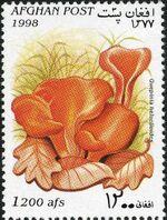 Afghanistan 1998 Mushrooms f