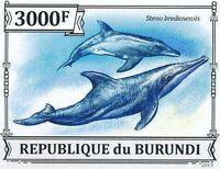 Burundi 2013 Dolphins k