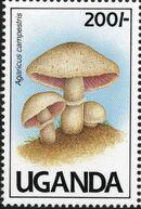 Uganda 1991 Mushrooms of Uganda f