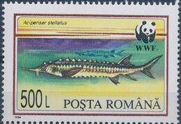 Romania 1994 WWF Sturgeons b