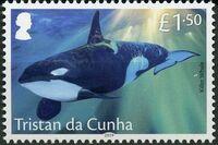 Tristan da Cunha 2019 Marine Mammals d