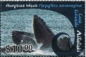 Aitutaki 2012 Whales & Dolphins l