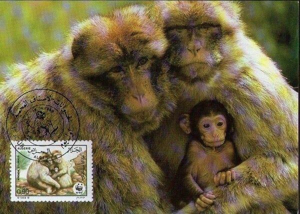 Algeria 1988 WWF - Barbary Macaque MCb