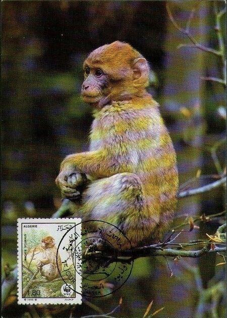 Algeria 1988 WWF - Barbary Macaque MCd