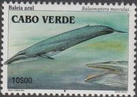 Cape Verde 2003 Whales a