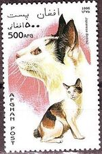 Afghanistan 1996 Cats b