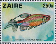 Zaire 1978 Fishes j