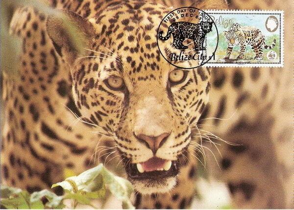 Belize 1983 WWF - Jaguar Mcd