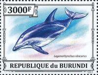 Burundi 2013 Dolphins h