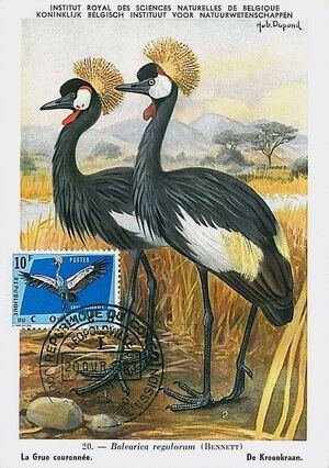Congo, Democratic Republic of 1963 Protected Birds (1st Group) MCg