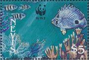 Nevis 1990 WWF Queen Conchs (Strombus gigas) e
