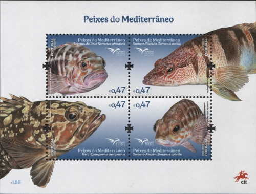 Portugal 2016 Fishes of the Mediterranean SSa