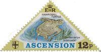 Ascension 1973 Turtles c