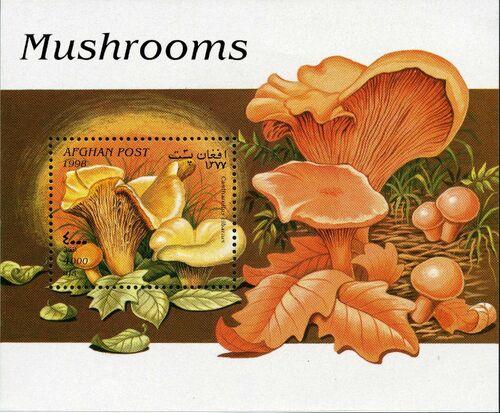 Afghanistan 1998 Mushrooms g