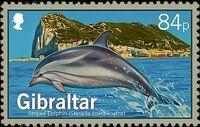 Gibraltar 2014 Dolphins b