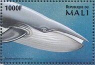 Mali 1997 Marine Life zk