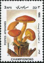 Afghanistan 1985 Mushrooms a